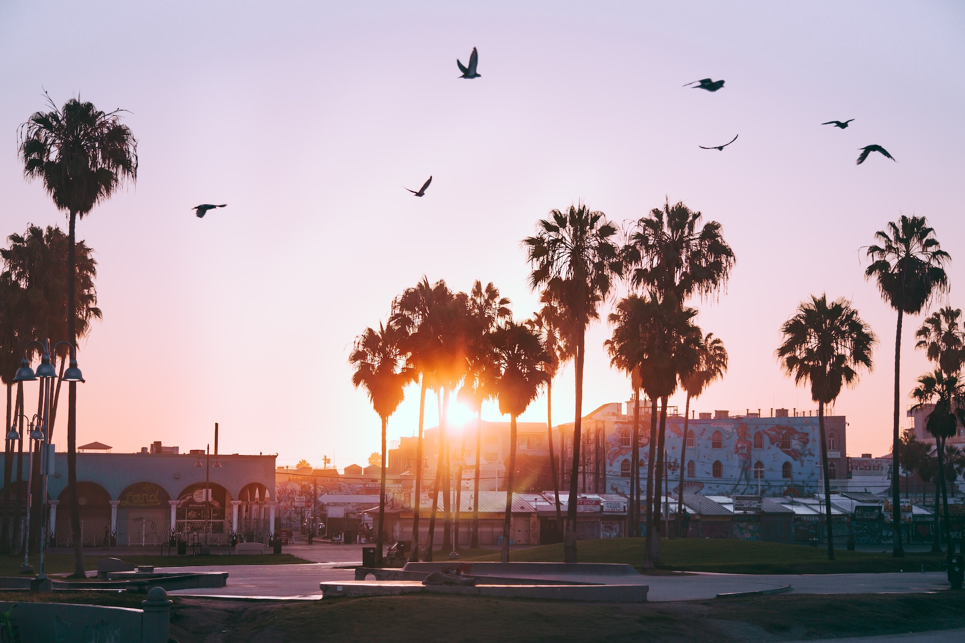 venice-beach-palm-trees